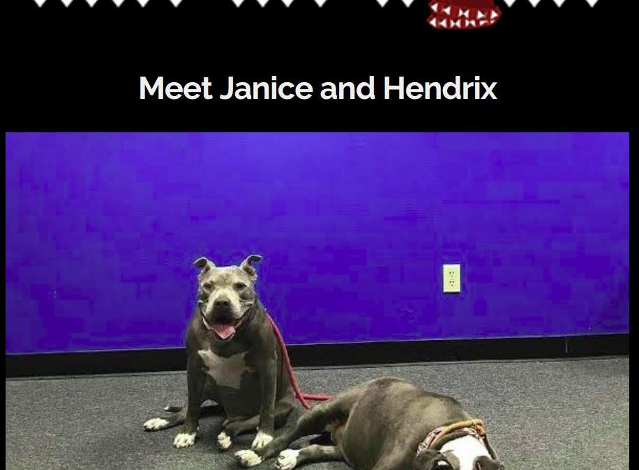 Benefit Concert for Rescue Dogs: Janice and Hendrix